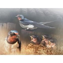 Golondrina común nidada (Hirundo rustica)