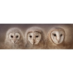 The ages of the Barn owl (Tyto alba)