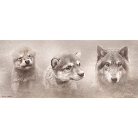 Lobo (Canis lupus)