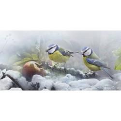 Herrerillos en invierno (Cyanistes caeruleus)