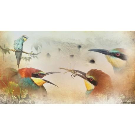 Colonia abejarucos (Merops apiaster)