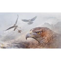 Bonelli's eagle(Aquila fasciata)