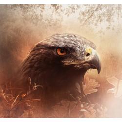 Águila imperial (Aquila adalberti)