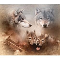 Familia de lobos (Canis lupus)